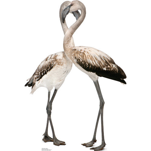 Advanced Graphics Flamingos - Love Birds Cardboard Stand-Up