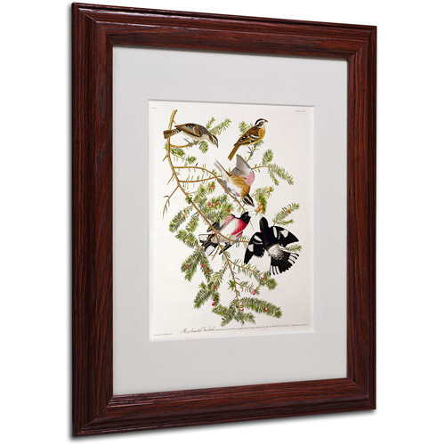 "Trademark Fine Art ""Rose-Breasted Grosbeak"" Canvas Art by John James Audubon, Wood Frame"