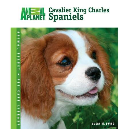 Cavalier King Charles Spaniels - eBook