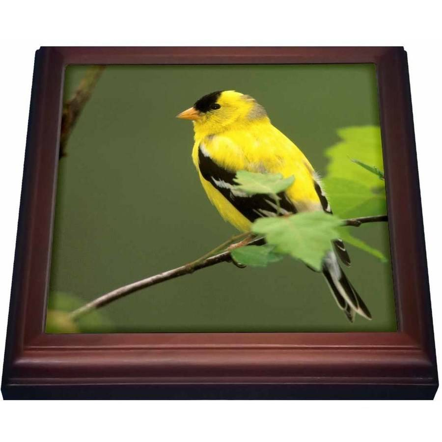 3dRose Male American Goldfinch bird - NA02 AJE0203 - Adam Jones, Trivet with Ceramic Tile, 8 by 8-inch