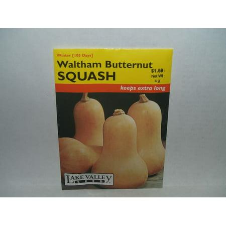 Image of Squash Waltham Butternut