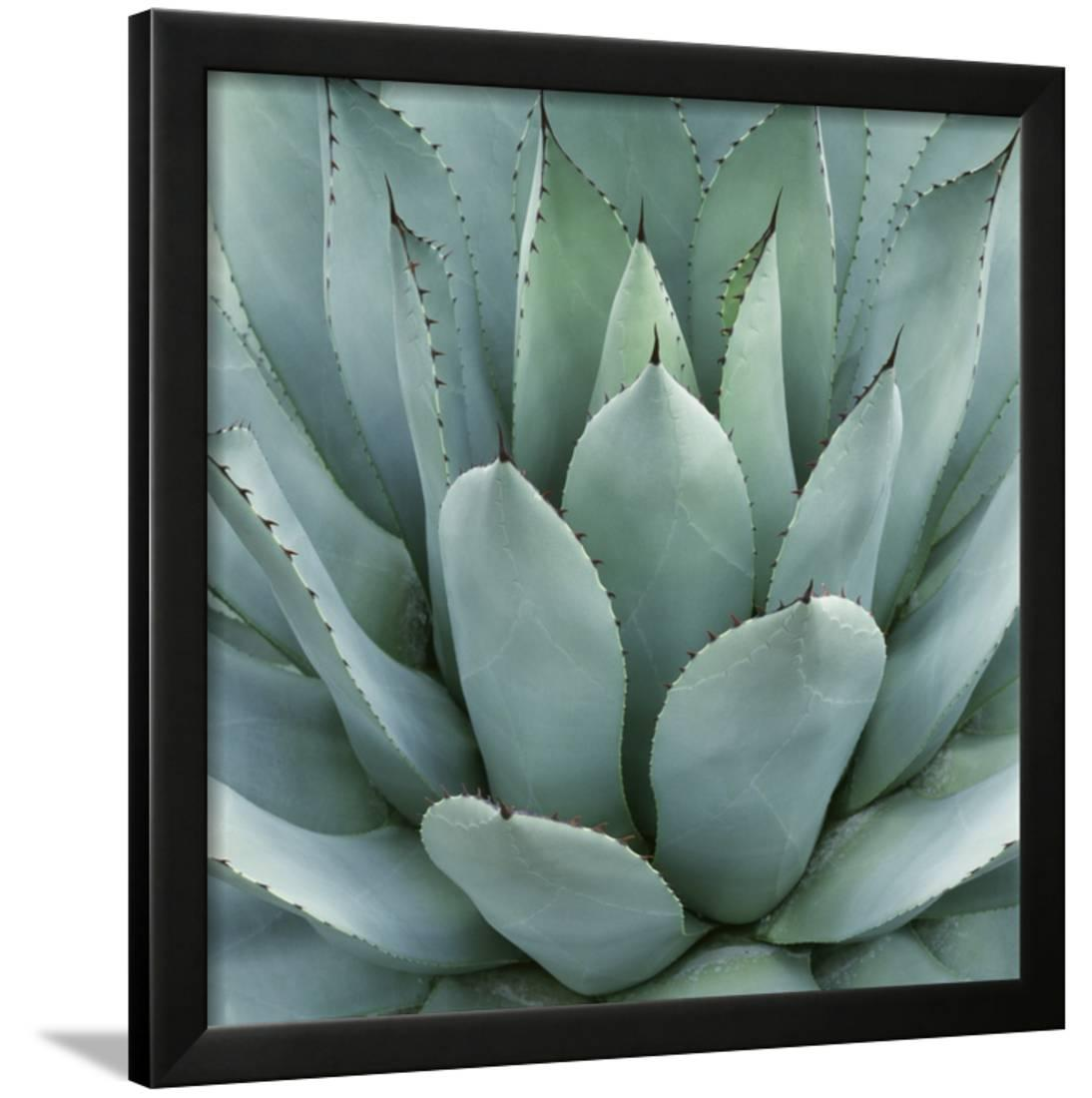 Click here to buy Agave Plant Framed Print Wall Artwork By Micha Pawlitzki by Art.com.