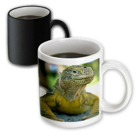 3dRose Land Iguana, Magic Transforming Mug, 11oz