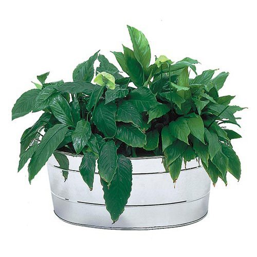Achla Designs Oval Stainless Steel Planting Tub