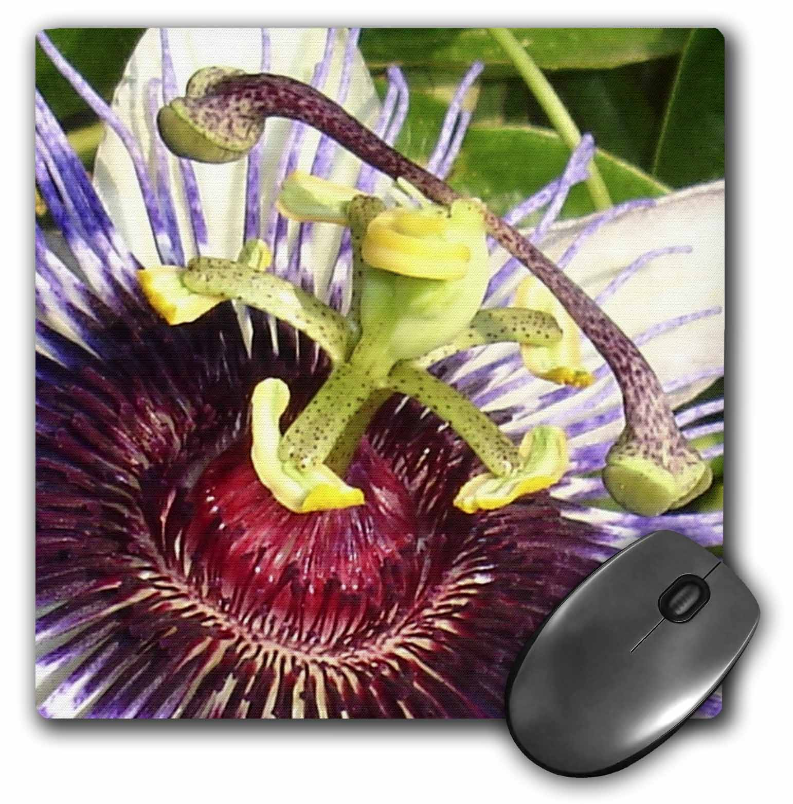 3dRose Clock Plant - passion flower, purple, nature, passiflora, wildflower of tennessee, christs thorn, Mouse Pad, 8 by 8 inches