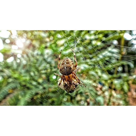 Canvas Print Bug Nature Spider Halloween Insect Web Cobweb Stretched Canvas 10 x 14 - Cobweb Eyes Halloween