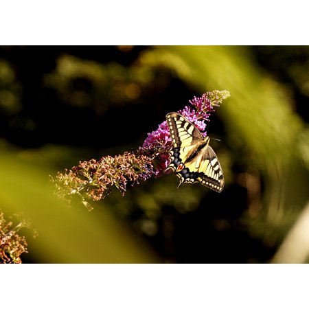 Canvas Print Wing Insect Butterfly Animal Dovetail Nature Stretched Canvas 10 x 14