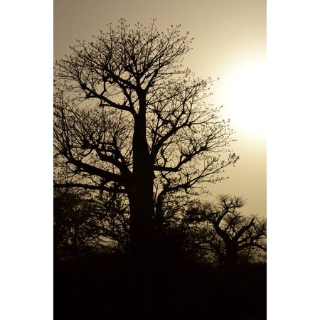 LAMINATED POSTER Bare Silhouette Branches Tree Poster Print 24 x 36 - Bare Tree Silhouette Halloween