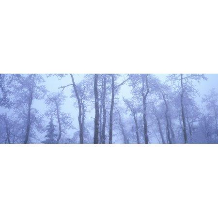 Frost Covered Trees In Fog Alaska Highway British Columbia Canada Stretched Canvas - David Nunuk  Design Pics (35 x