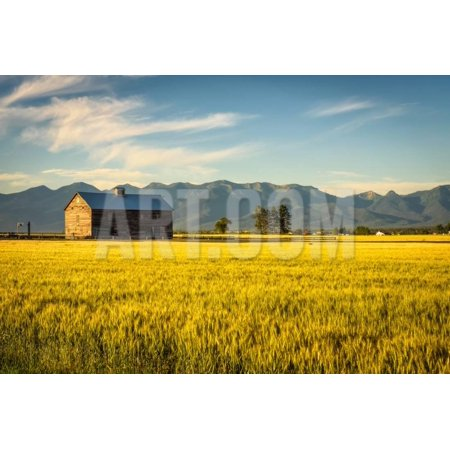 Summer Sunset with an Old Barn and a Rye Field in Rural Montana with Rocky Mountains in the Backgro Print Wall Art By Nick