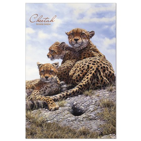 - Tree-Free Greetings Cheetah Family Classic ECOnotes Blank Note Cards-FS66917