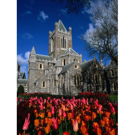 Christ Church Cathedral Surrounded by Tulips in Bloom, Dublin, County Dublin, Ireland, Leinster Print Wall Art By Martin Moos (Halloween Martin County)