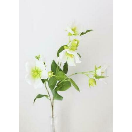 Silk Hibiscus Flowers (2PK Cream Green Silk Chinese Hibiscus Flowers - 33