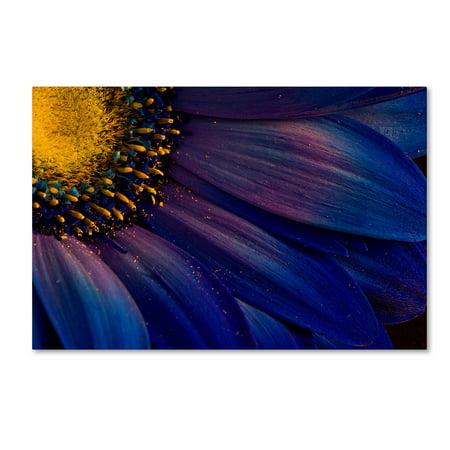 Trademark Fine Art 'Blue Rays' Canvas Art by borsteinn H (Ray Ban Trademark)