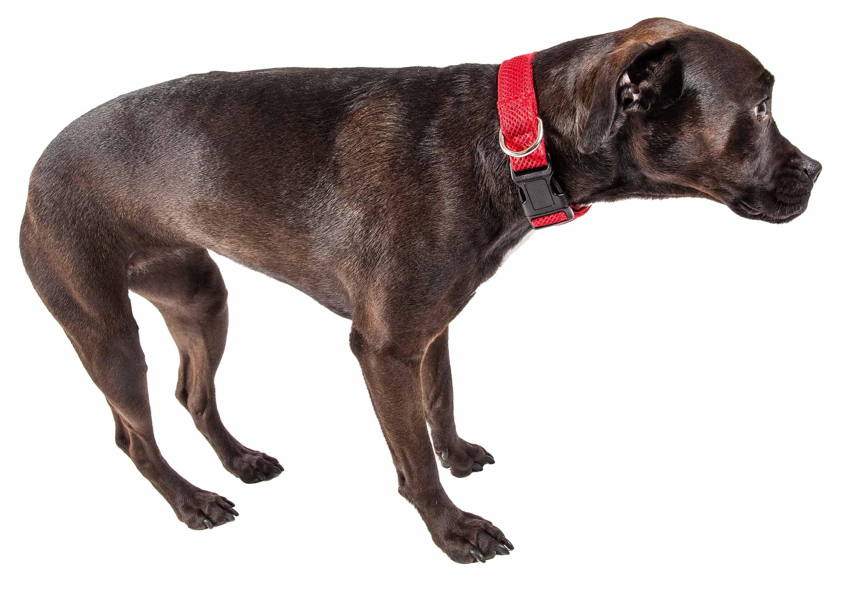 Pet Life Aero Mesh 360 Degree Dual Sided Comfortable And Breathable Adjustable Mesh Dog Collar Walmart Com Walmart Com