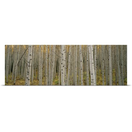 Great Big Canvas Ron Watts Poster Print Entitled Aspen Grove In Fall  Kebler Pass  Colorado
