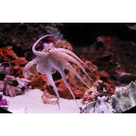Canvas Print Kraken Ocean Animal Octopus Aquarium Sea Life Stretched Canvas 10 x 14 (Kraken Replacement Tank)