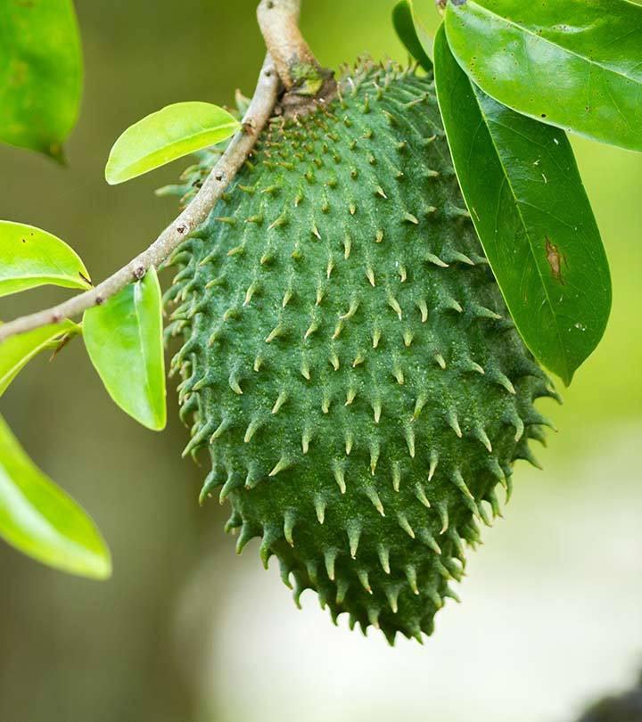 ~COROSSOL ZOMBIE~ FRUIT TREE Annona montana BOLIVIAN ...  |Guyabano Tree