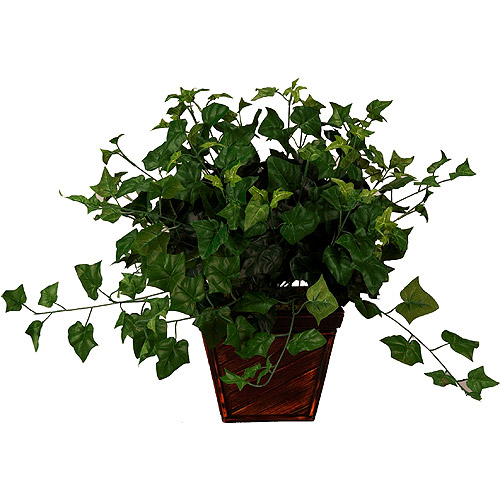English Ivy In Square Bamboo Planter