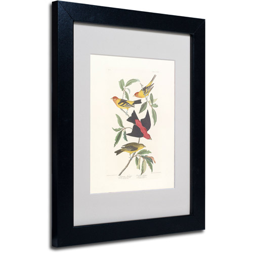 "Trademark Fine Art ""Louisiana Tanager"" Canvas Art by John James Audubon, Black Frame"