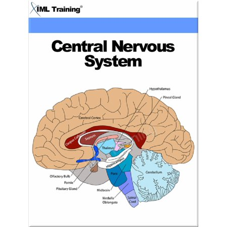Central Nervous System (Human Body) - eBook