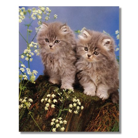 Two Persian Kittens Sitting on Stump Cat Wall Picture 8x10 Art Print Art Com Persian Print