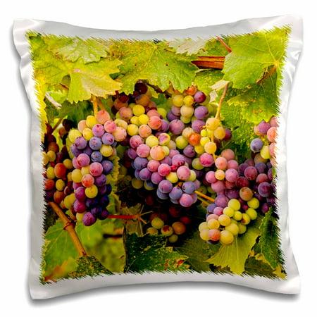 - 3dRose USA, Washington, Okanogan Valley. Pinot grapes ripen during veraison. - Pillow Case, 16 by 16-inch