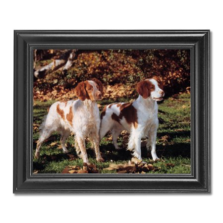 Two Brittany Spaniel Puppy Dogs Standing Photo Wall Picture Black Framed