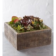1800Flowers Succulent Centerpiece in Reclaimed Wood Planter