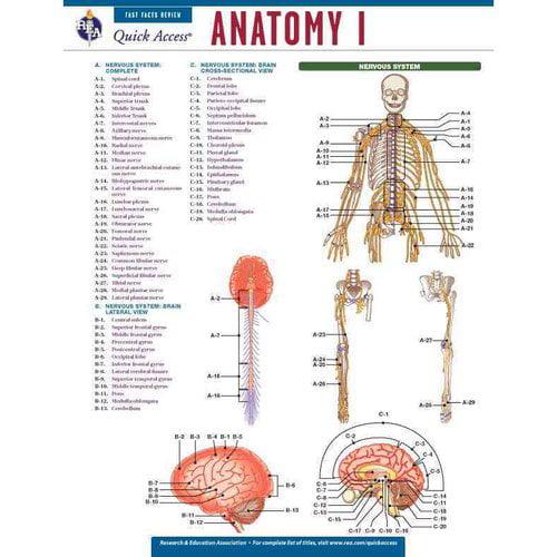 Anatomy I