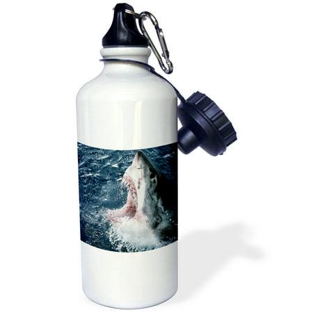 3dRose Head of Great White Shark , Sports Water Bottle, 21oz