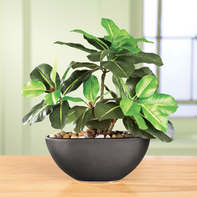 Faux Rubber Tree Plant with Ceramic Pot