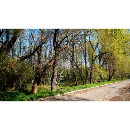 LAMINATED POSTER The Path Landscape Tree Plants View Nature Park Poster Print 24 x