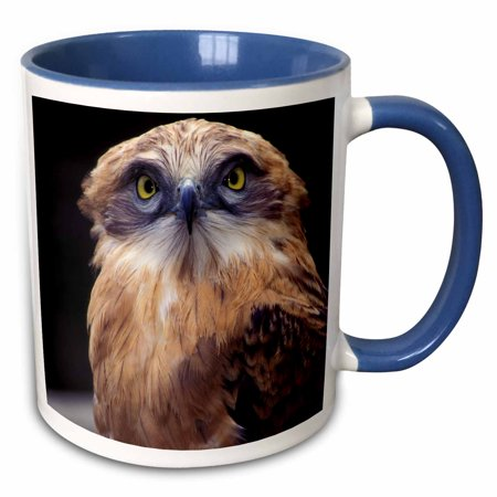 3dRose South Africa. Spotted Eagle Owl (Bubo africanus)-AF42 MWT0015 - Michele Westmorland - Two Tone Blue Mug, 11-ounce