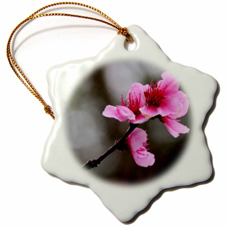 3dRose Single Cherry Blossom Pink Cherry Blossom - Snowflake Ornament, 3-inch Single Cherry Blossom Pink Cherry Blossom Ornament is a perfect addition to your tree or as a window decoration.  This glossy porcelain ornament is a great gift for family and friends, commemorating each holiday or special occasion.  Image printed on both sides; measures 3 inches.  A strand of gold thread makes it easy to display this fantastic keepsake.