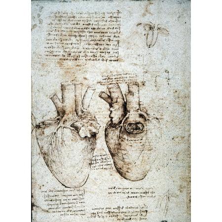 Leonardo Heart C1512 Nstudies Of An Ox Heart By Leonardo Da Vinci