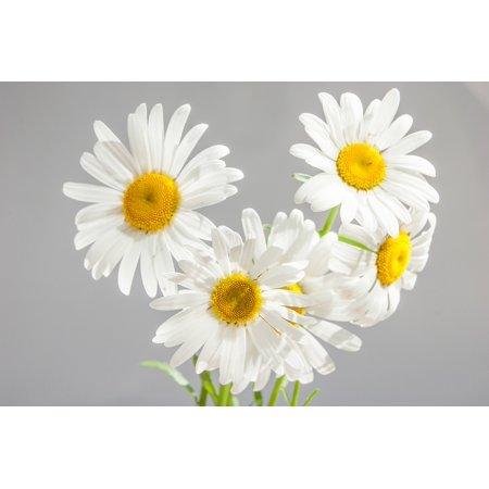 Canvas Print Bloom Flowers Chamomile Yellow Center White Daisies Stretched Canvas 10 x - Center Daisy