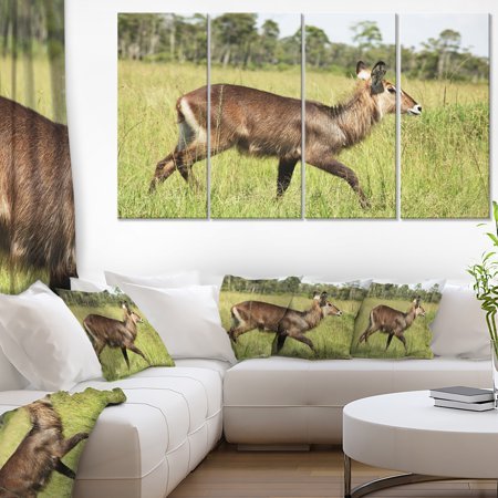 Waterbuck Antelope in Green Grass - Extra Large African Canvas Art Print - image 3 de 3
