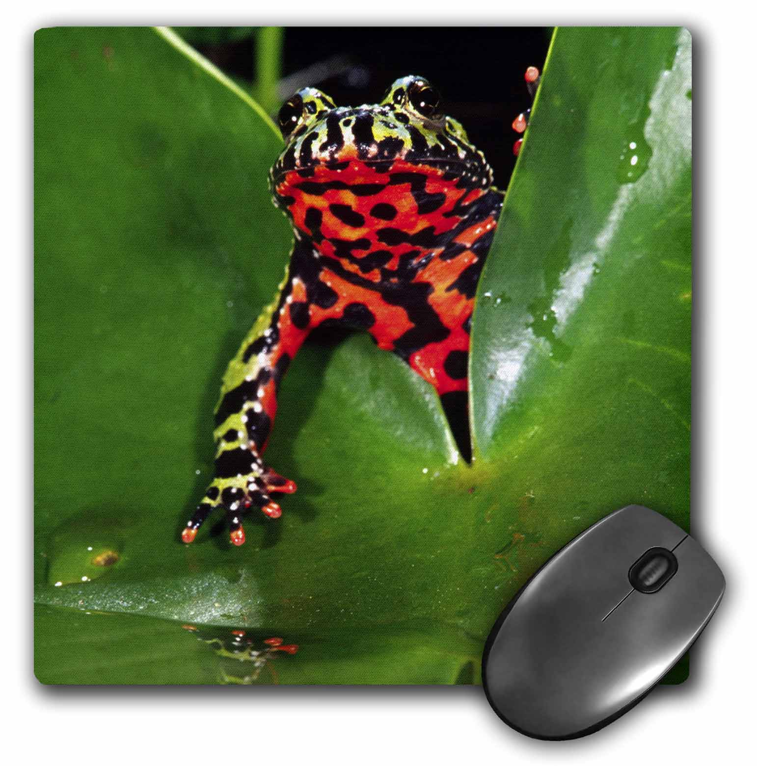 3dRose Fire Belly Toad, Native to China - NA02 DNO0112 - David Northcott, Mouse Pad, 8 by 8 inches