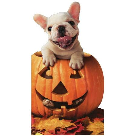 Avanti Press Dog In Jack O Lantern Halloween - Halloween Jack O Lantern Cake
