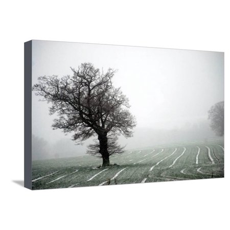 Norfolk field with single tree Stretched Canvas Print Wall Art By Angela Marsh