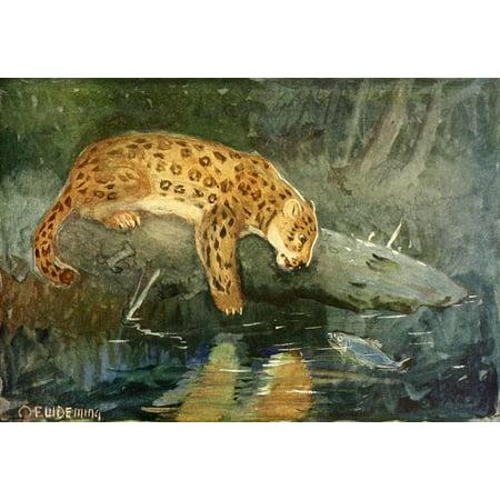 American Animal Life 1916 Jaguar Canvas Art   Ew Deming  18 X 24