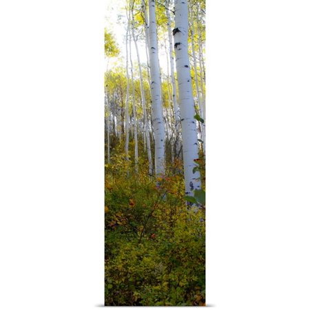 Great Big Canvas Kathy Mansfield Poster Print Entitled Aspen In The Day Ii