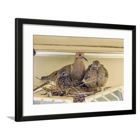 Sheltered Nesting Space and Mourning Dove Family Atop a Security Light Framed Print Wall Art By Michael Qualls (Family Space 3 Light Pendant)