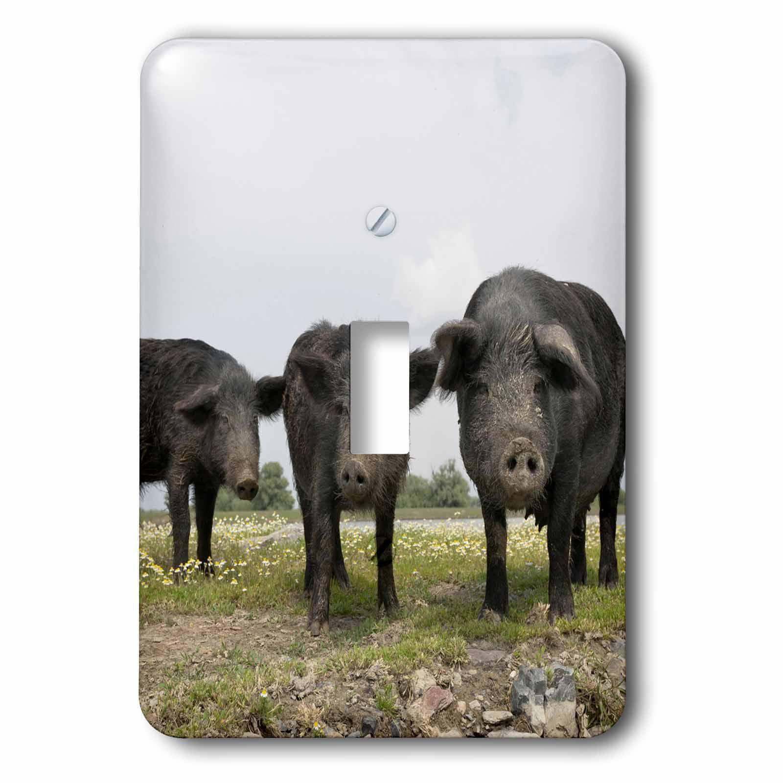 3dRose Pigs of Maliuc, Romania - EU24 MZW0180 - Martin Zwick, 2 Plug Outlet Cover