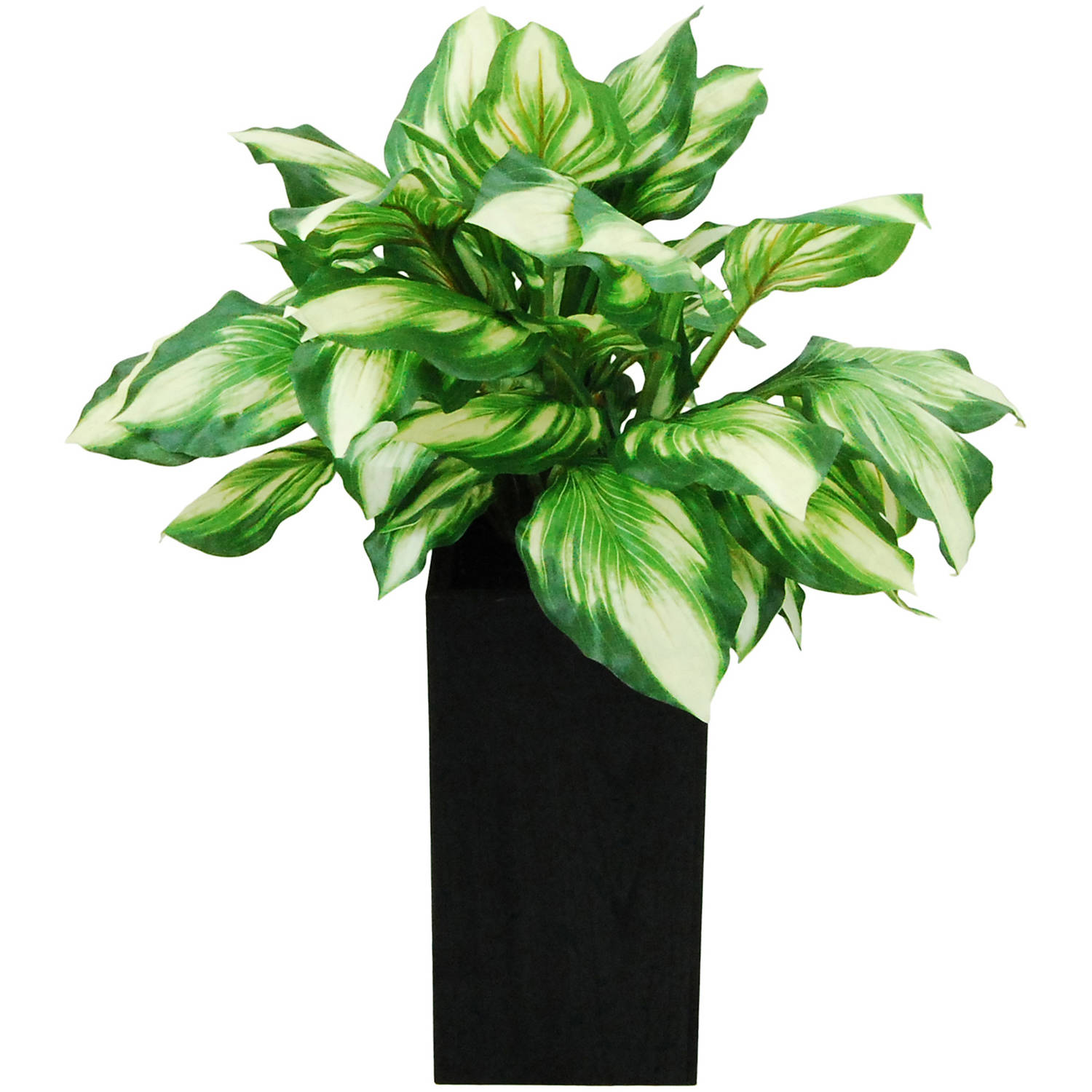 Hosta Planter in a Wooden Container
