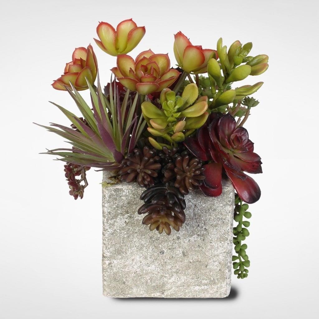 Jenny Silks Succulent, Jade Plant and Rosette Succulent C...