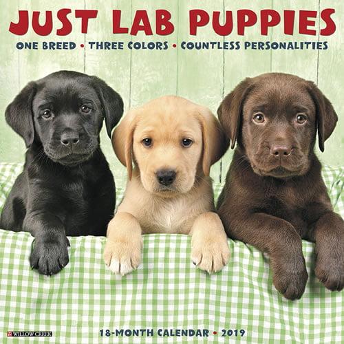 Willow Creek Press 2019 Just Lab Puppies Wall Calendar