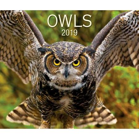 Owls 2019 Calendar - Owl Calendar