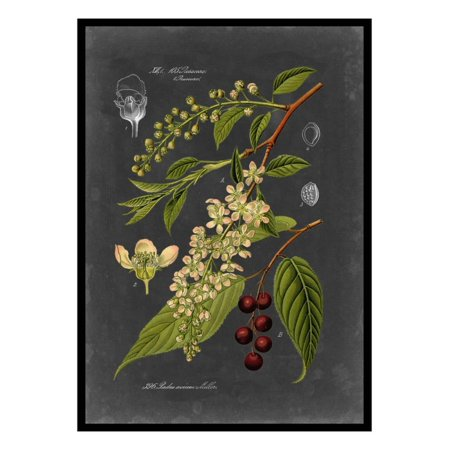 Midnight Botanical II Vintage Floral Illustration Print Wall Art By Vision Studio